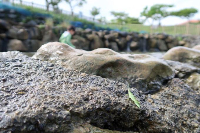 沖縄県うるま市「倉敷ダム」バッタも川遊び・・・?