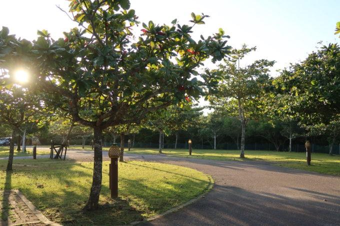 沖縄県東村「つつじエコパーク」キャンプ場のオートサイト