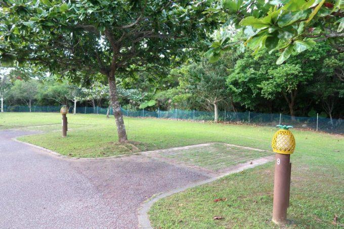 沖縄県東村「つつじエコパーク」キャンプ場のオートサイトの駐車場