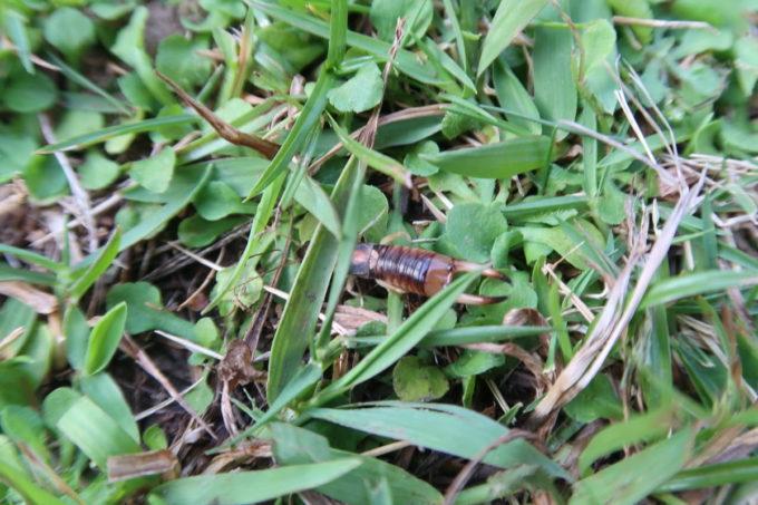 沖縄県東村「つつじエコパーク」キャンプ場で見かけた謎の虫