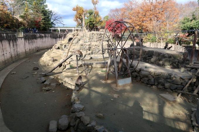仙台市「八木山動物公園」のサル山