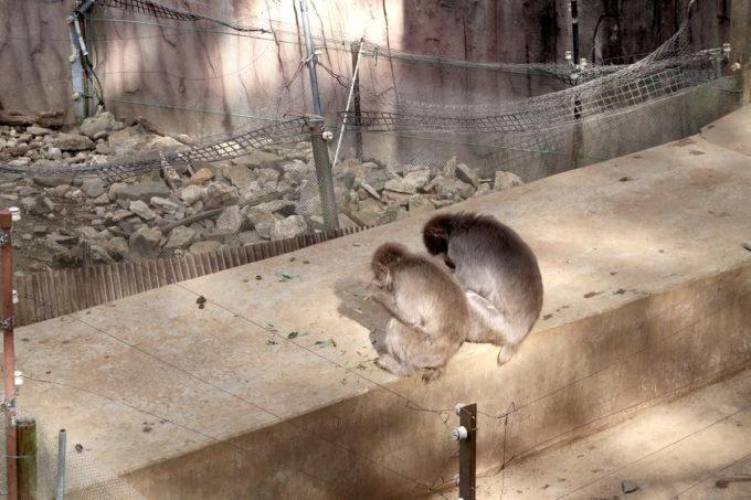 仙台市「八木山動物公園」親子でしょうか、並んで背を向けるサル2匹