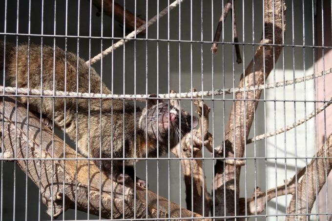 仙台市「八木山動物公園」これは・・・?