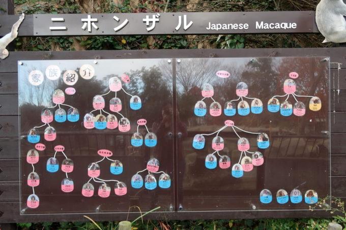 仙台市「八木山動物公園」ニホンザルの関係図