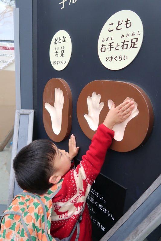 仙台市「八木山動物公園」チンパンジーの手足型とお子サマー