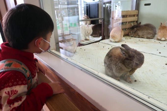 仙台市「八木山動物公園」ウサギのお部屋