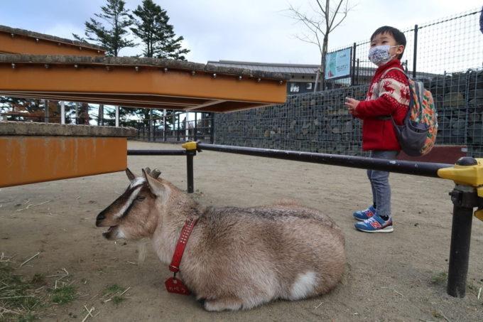 仙台市「八木山動物公園」ヤギに背を向けられ、怖がるお子サマー