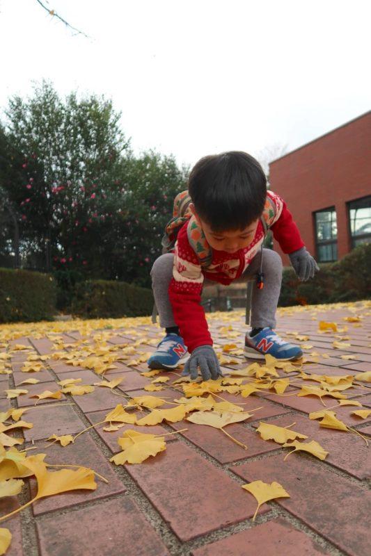 仙台市「八木山動物公園」イチョウの落ち葉に興味津々のお子サマー