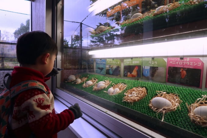 仙台市「八木山動物公園」いろんな卵を並べるコーナー