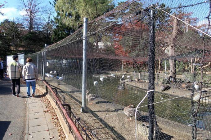 仙台市「八木山動物公園」ハクチョウ、ガン、カモのいるエリア