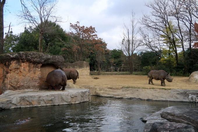 仙台市「八木山動物公園」カバのコーナー