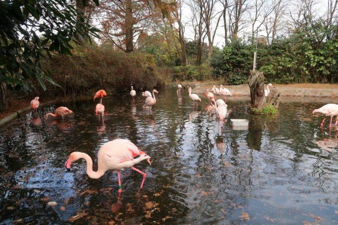 仙台市「八木山動物公園」フラミンゴの池