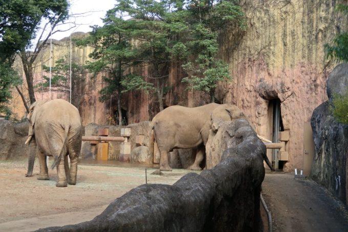 仙台市「八木山動物公園」ゾウのエリア