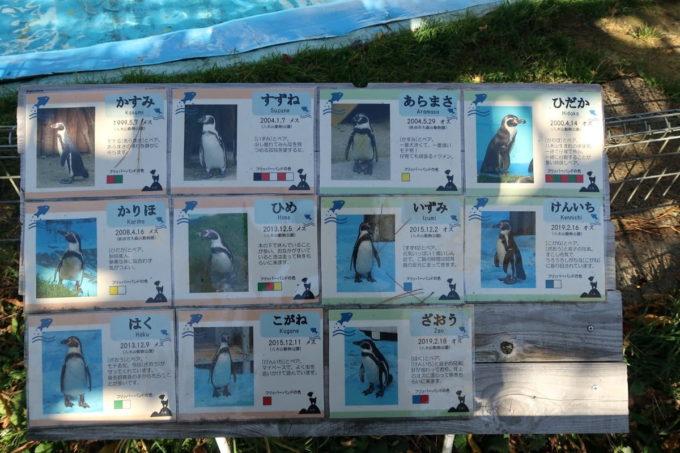 仙台市「八木山動物公園」ペンギンの自己紹介