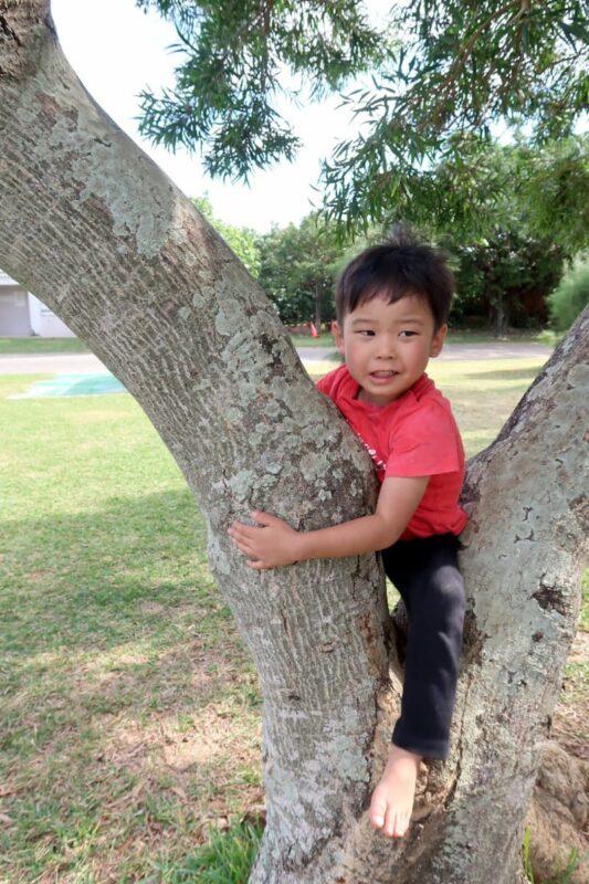 沖縄県総合運動公園キャンプ場で木登りするお子サマー