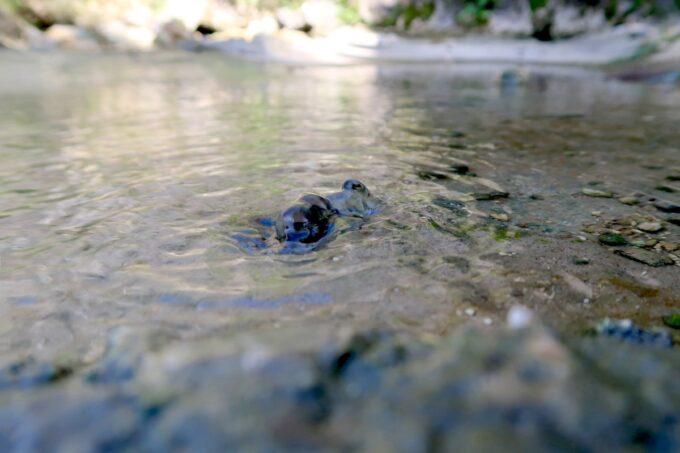 糸満「与座川(ヨザガー)」の通路脇では水が湧き出る場所もあった