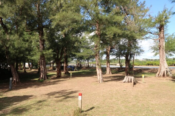 沖縄県金武町「ネイチャーみらい館」のキャンプサイト