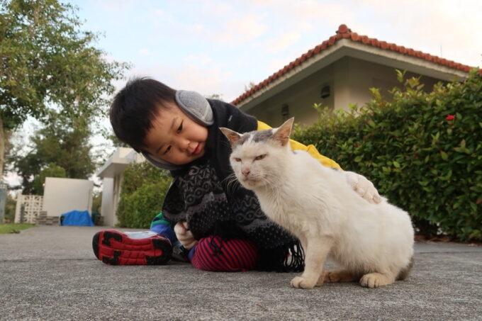 沖縄県金武町「ネイチャーみらい館」にいる野良猫