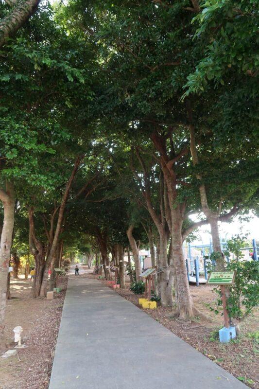 沖縄県金武町「ネイチャーみらい館」の駐車場側にある並木
