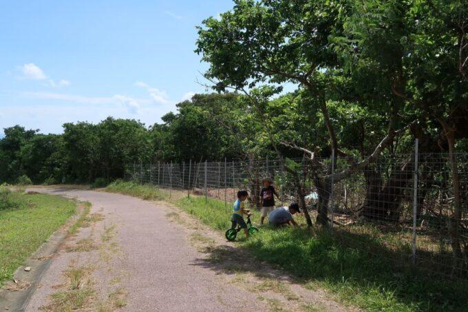 南城市「グスクロード公園」遊歩道があり自転車の練習ができる
