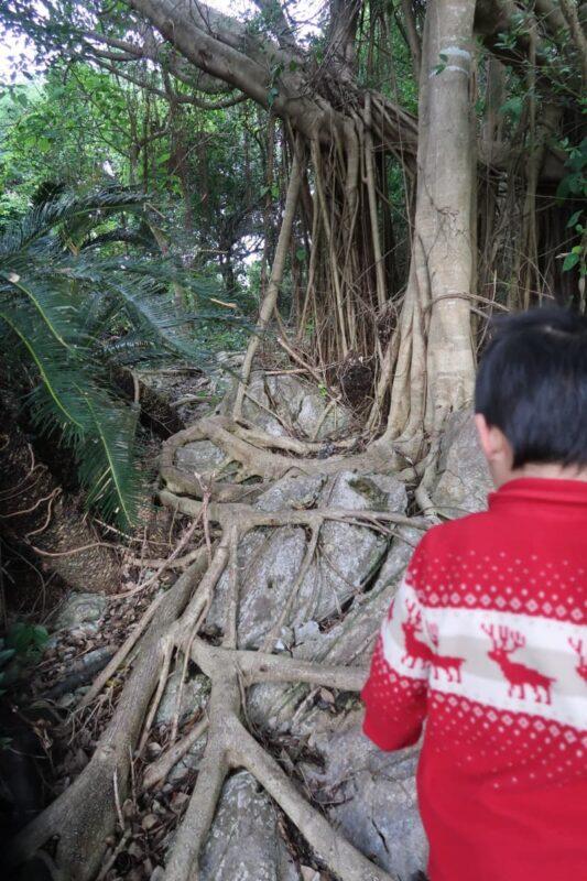 沖縄・本部町「KARST CAMP SITE(カルストキャンプサイト)」4歳児と展望台を目指すも、足元が悪すぎて途中で断念