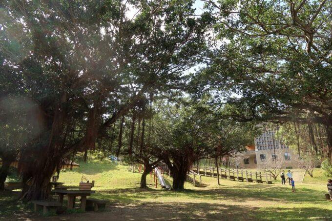 沖縄市「八重島公園」南側エリアは木が生い茂っている