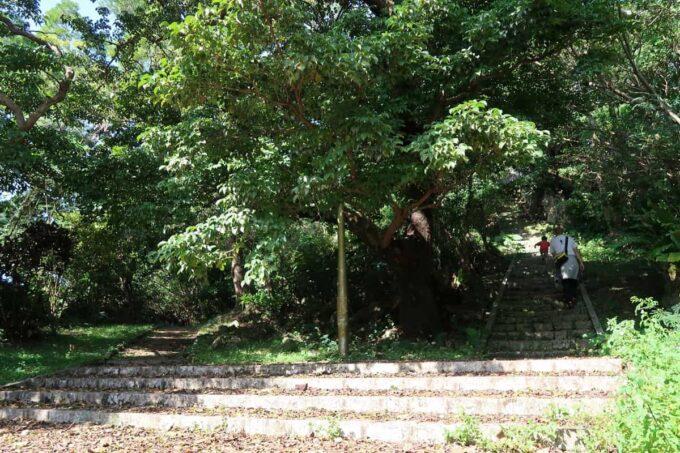沖縄市「八重島公園」ピクニック広場の様子