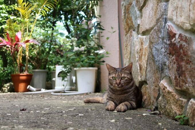 南城市「ガーデンレストラン花さんご」のお庭でくつろぐ猫