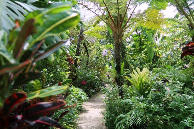 南城市「ガーデンレストラン花さんご」ジャングルのようなお庭