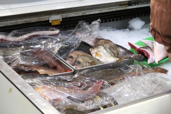 高松市「さかな屋さんの居酒屋 北島商店酒場」店頭に並ぶお魚たち