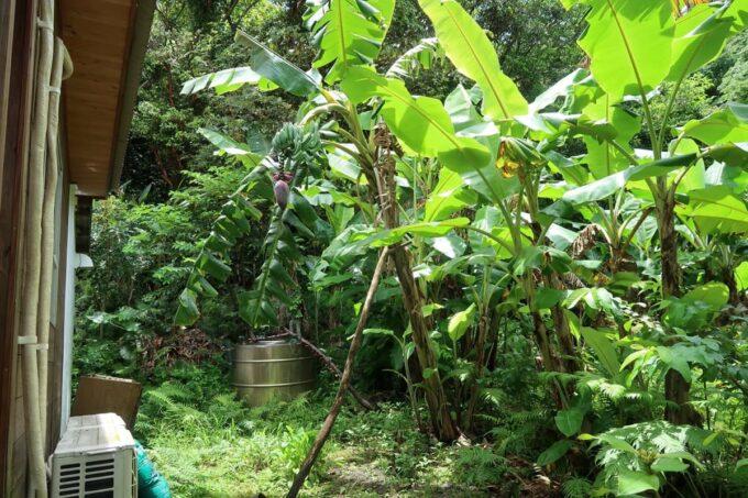 名護市許田「守良屋(すろーやー)」古民家のお庭は緑が豊か